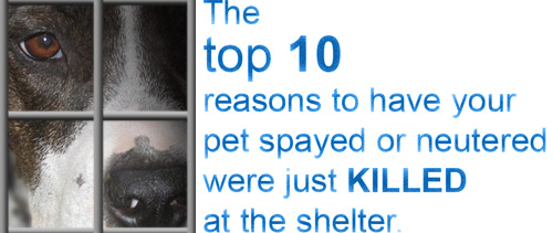 Top 10 reasons to spay or neuter
